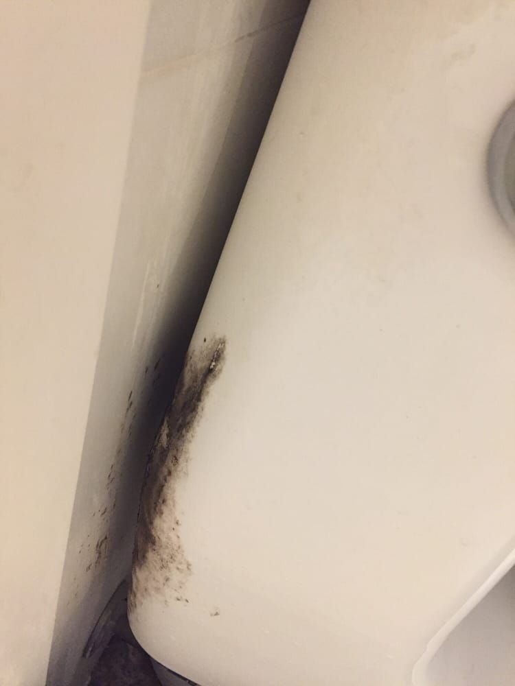Black mold behind the toilet - Yelp