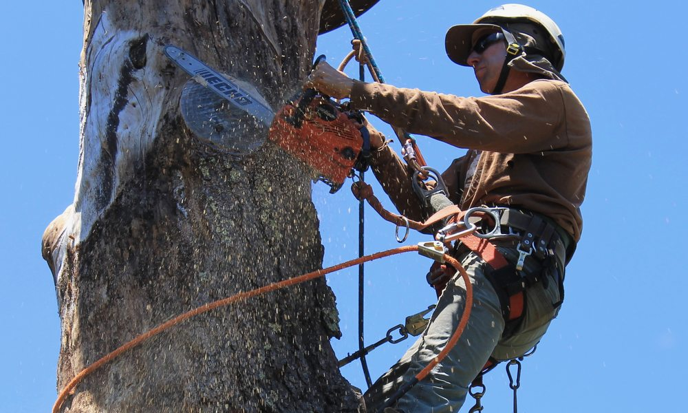 Art & Science Tree Service: Sonoma, CA