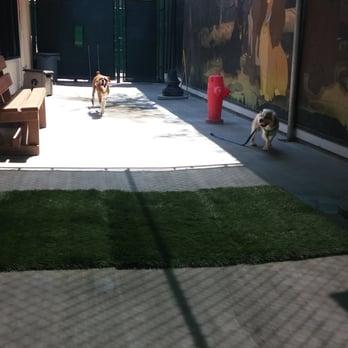 Dog Day Care Anaheim