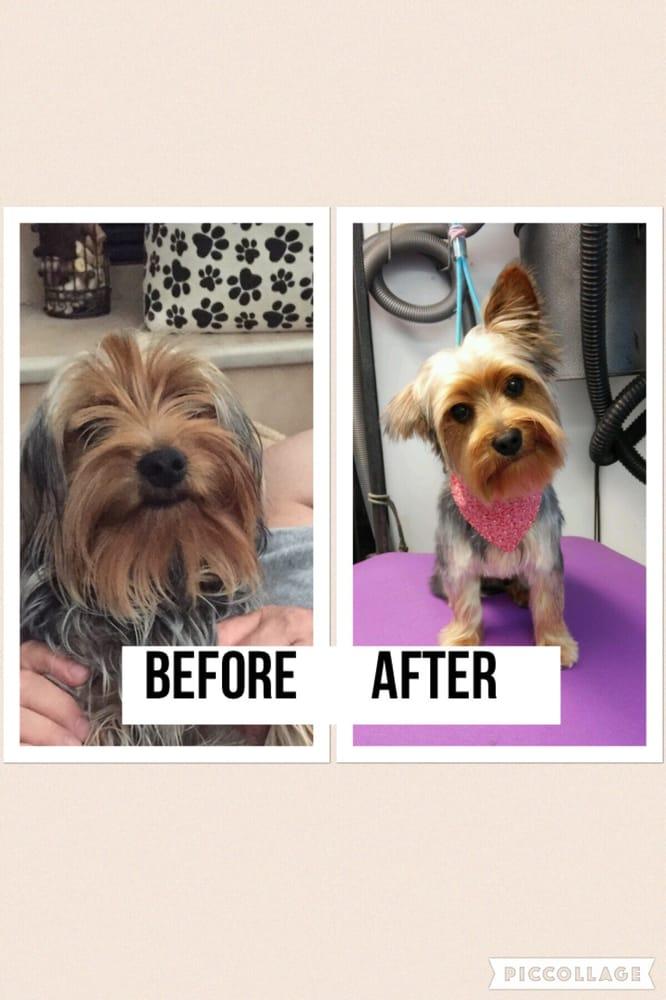 Vanity Fur Mobile Pet Salons