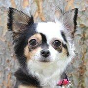 animal shelter in oakley ca