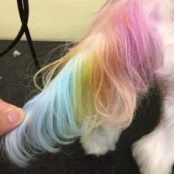 Dazzling Pup - 159 Photos & 101 Reviews - Pet Groomers - 127 N San ...