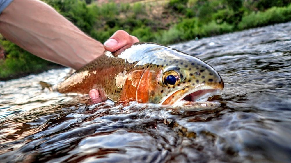 Fly Fishing Outfitters: 1060 W Beaver Creek Blvd, Avon, CO