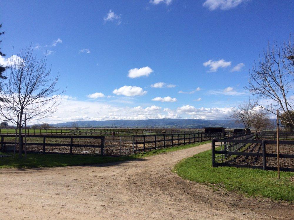 Dreamland Farms: 8127 N Meridian Rd, Dixon, CA