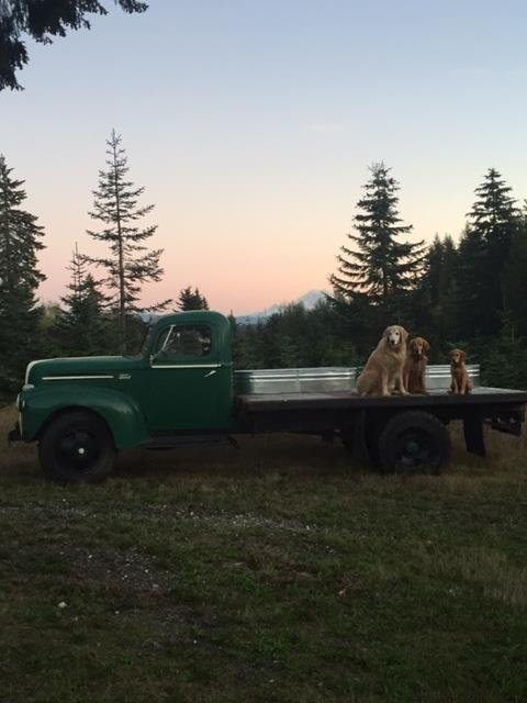 Traditions Tree Farm: 24030 SE 192nd St Maple Valley Wa 98038, Maple Valley, WA