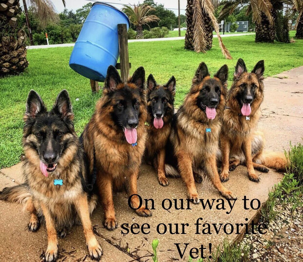 Clear Creek Animal Hospital: 2729 Nasa Pkwy, Seabrook, TX