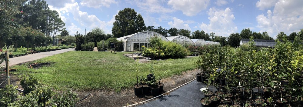 Blue Star Nursery: 8115 SE US Highway 301, Hawthorne, FL