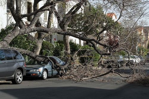 Erie Tree Trimmers: 707 W 38th St, Erie, PA
