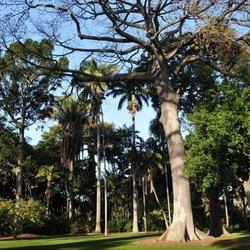Photo Of Foster Botanical Garden   Honolulu, HI, United States. The Main  Lawn