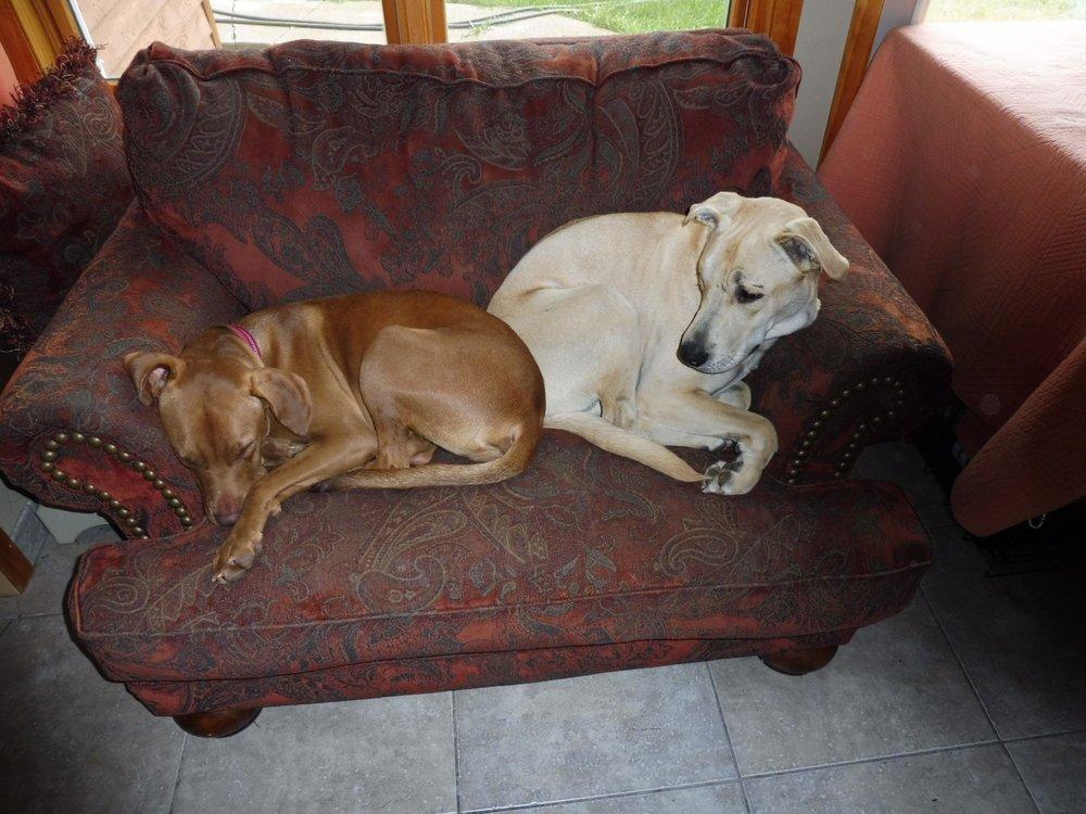 Friendly Paws Pet Care: 30707 County Rd 1, La Crescent, MN