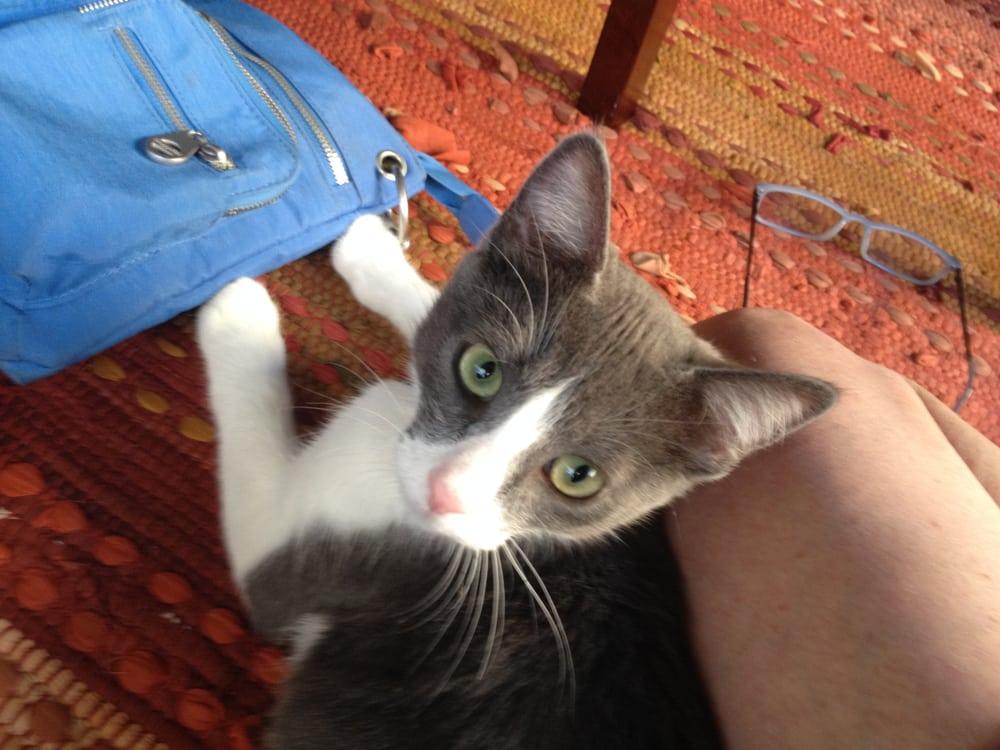 Pam's Pet Sitting Service: 313 Spyglass Pkwy, Vallejo, CA
