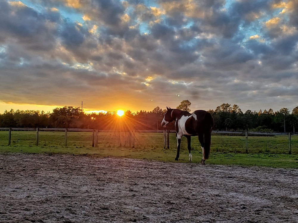 Deep Creek Stables: 2270 S County Rd 3, Pierson, FL