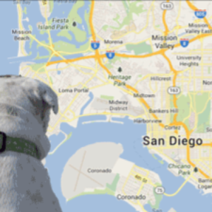 PawPrints In-Home Pet Sitting - 36 Reviews - Pet Sitting