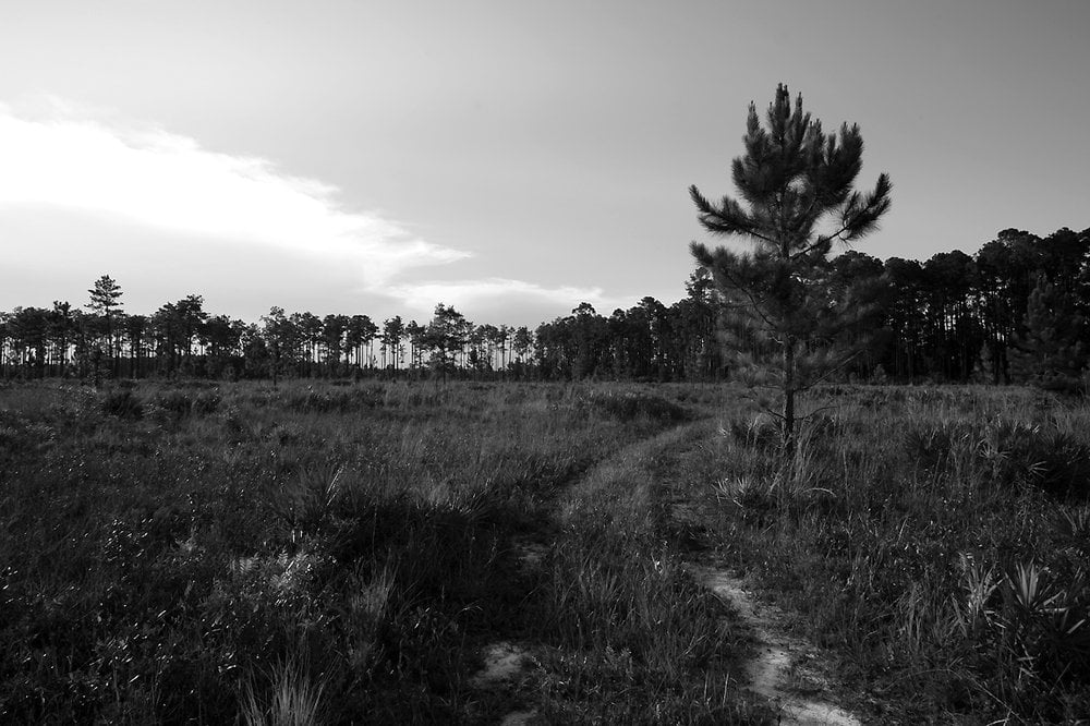 Longleaf Flatwoods Reserve: Cr 325, Hawthorne, FL
