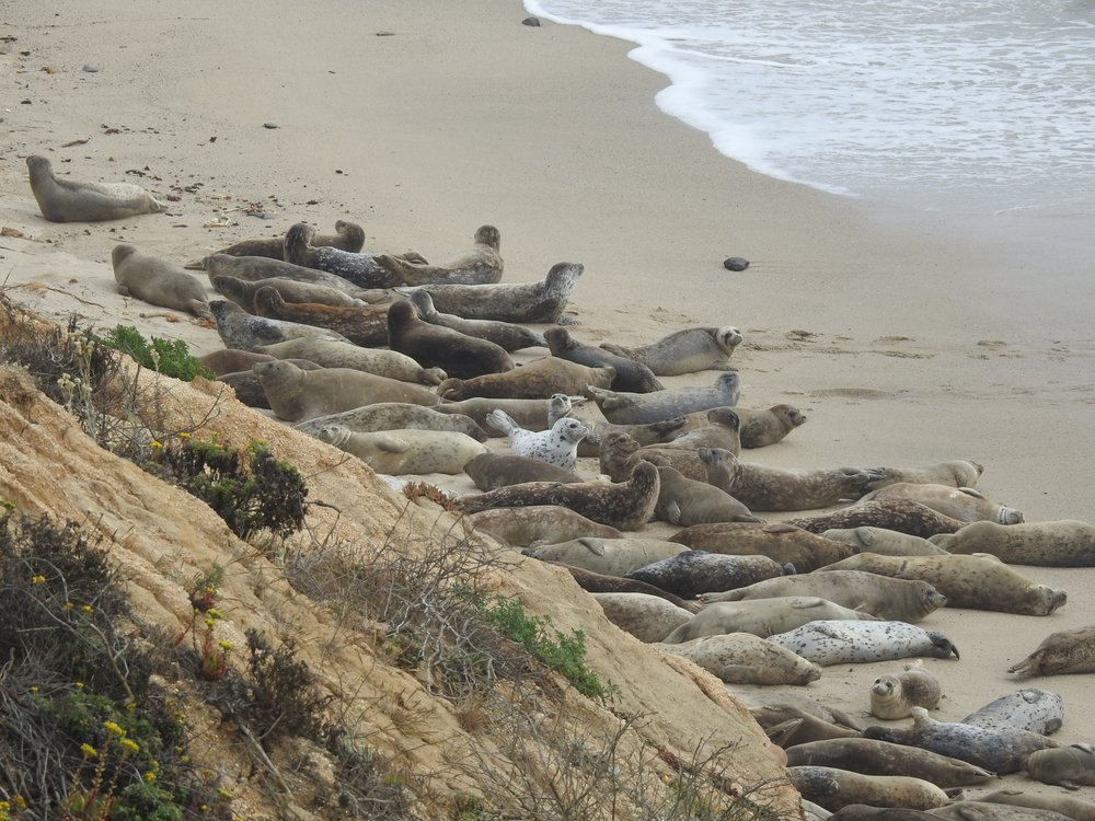 Fitzgerald Marine Reserve Sealsitters: 200 California Ave, Moss Beach, CA