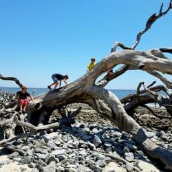 Photo Of Driftwood Beach Jekyll Island Ga United States The Boys Had