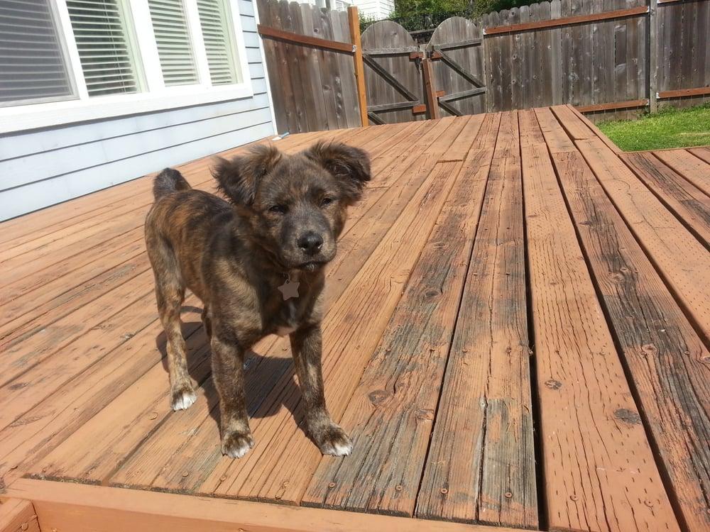 Dog Rescue Tualatin Oregon