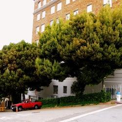 City Trees - 10 Photos & 19 Reviews - Tree Services - Noe Valley