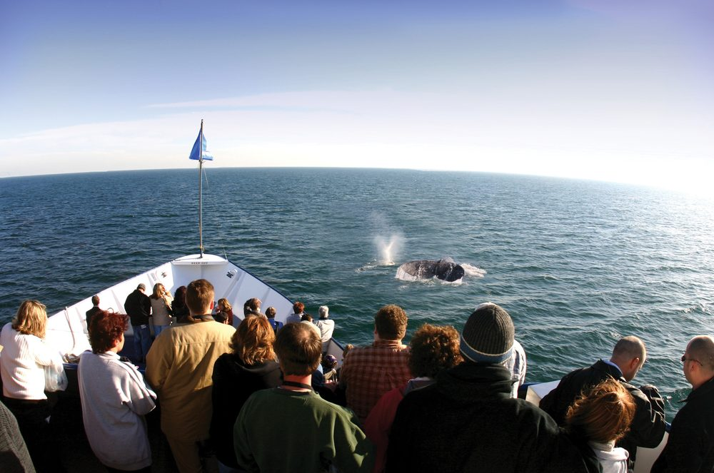 Hornblower Cruises & Events: 970 N Harbor Dr, San Diego, CA