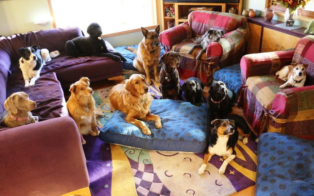Pampered Pooches Playground: 15954 Jackson Creek Pkwy, Monument, CO