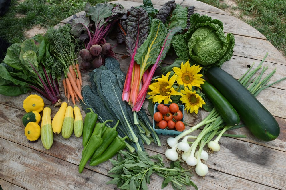 Seed Song Farm and Center: 160 Esopus Ave, Kingston, NY