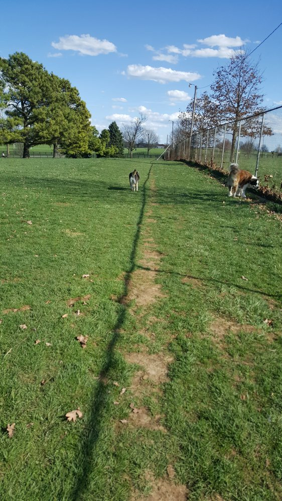 Dog Park Lexington Ky