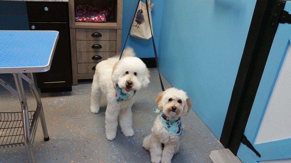 Blue Quail VIP Pet Services: 1201 W Iron Springs Rd, Prescott, AZ