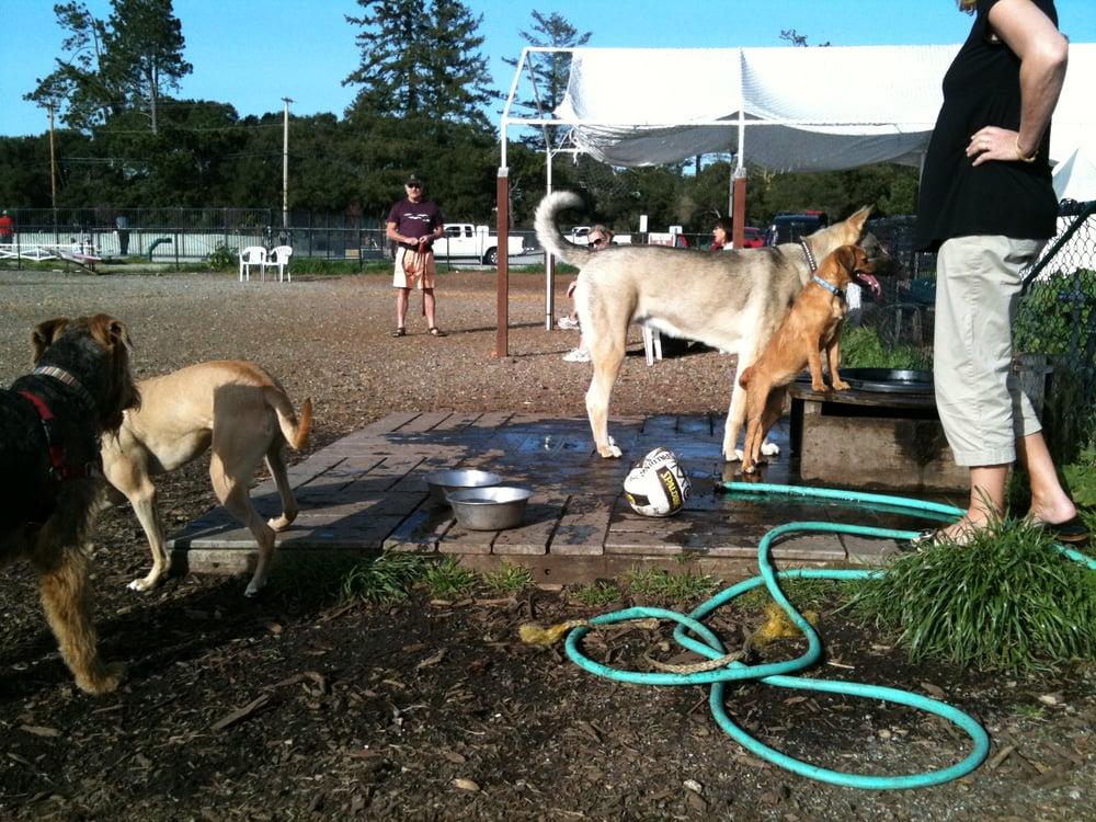 Scotts Valley Dog Park