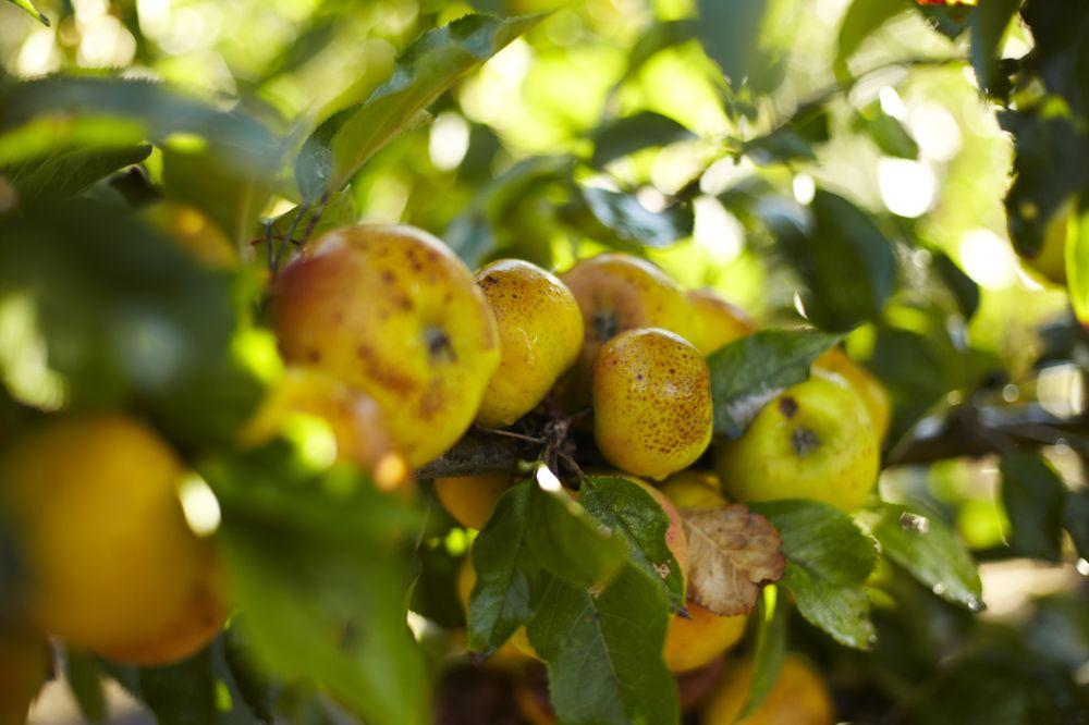 Applegarden Farm Cider Mill: 3875 Tomales-Petaluma Rd, Tomales, CA