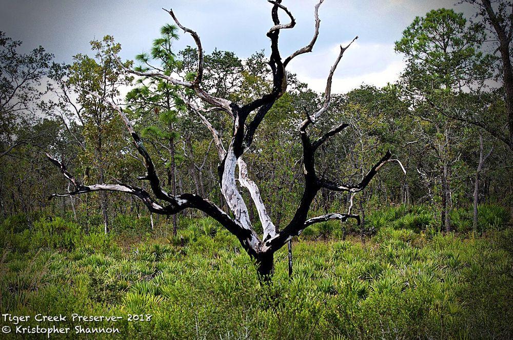 Tiger Creek Preserve: 674 Pfundstein Rd, Babson Park, FL