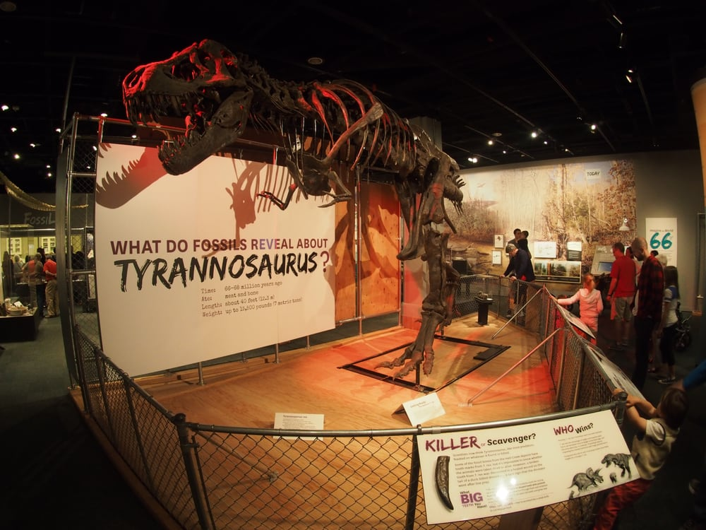 Restaurants Near The Smithsonian Museum Of Natural History