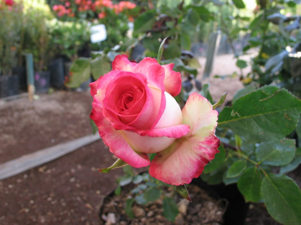 Fotos de viveros cabrera yelp for Viveros de plantas en atlixco