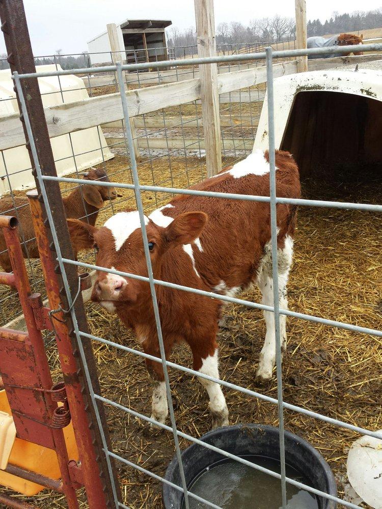 Oakridge Farm: S40w35961 County Rd C, Dousman, WI