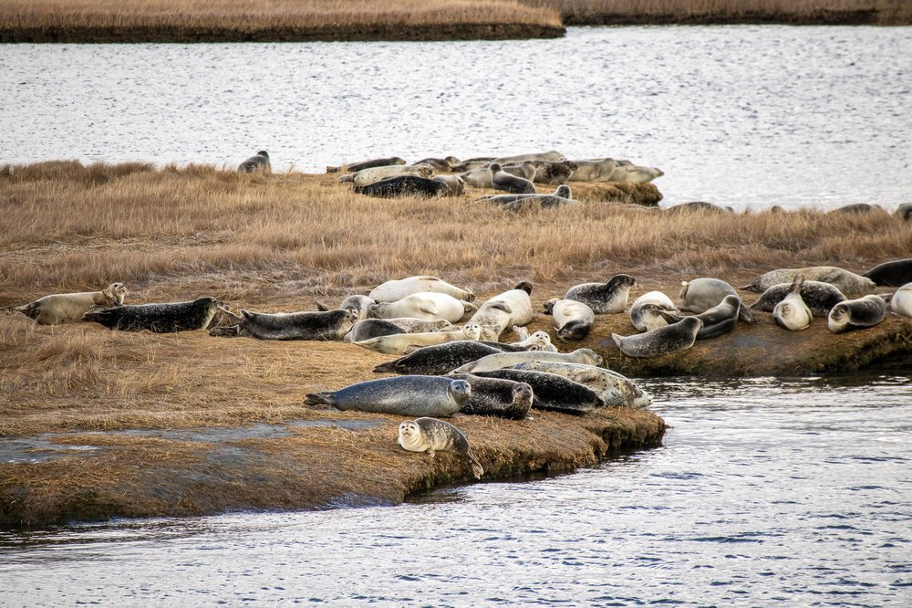 Long Island Whale & Seal Watching: 31 Woodcleft Ave, Freeport, NY