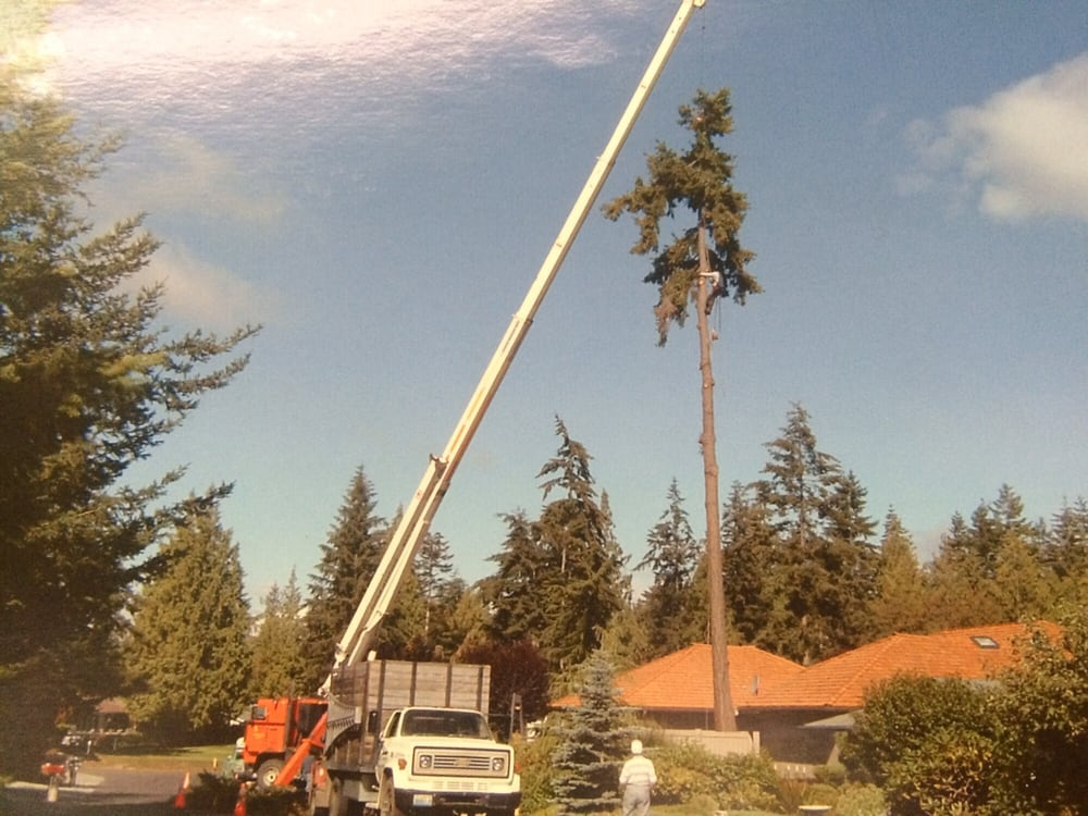 Town & Country Tree Experts: 320 Blyn Springs Rd, Sequim, WA