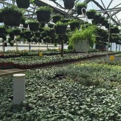 willow greenhouse 24 fotos g rtnerei gartencenter. Black Bedroom Furniture Sets. Home Design Ideas