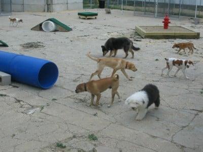 Good Dog Home Obedience Training Llc: N1024 US Hwy 51, Arlington, WI