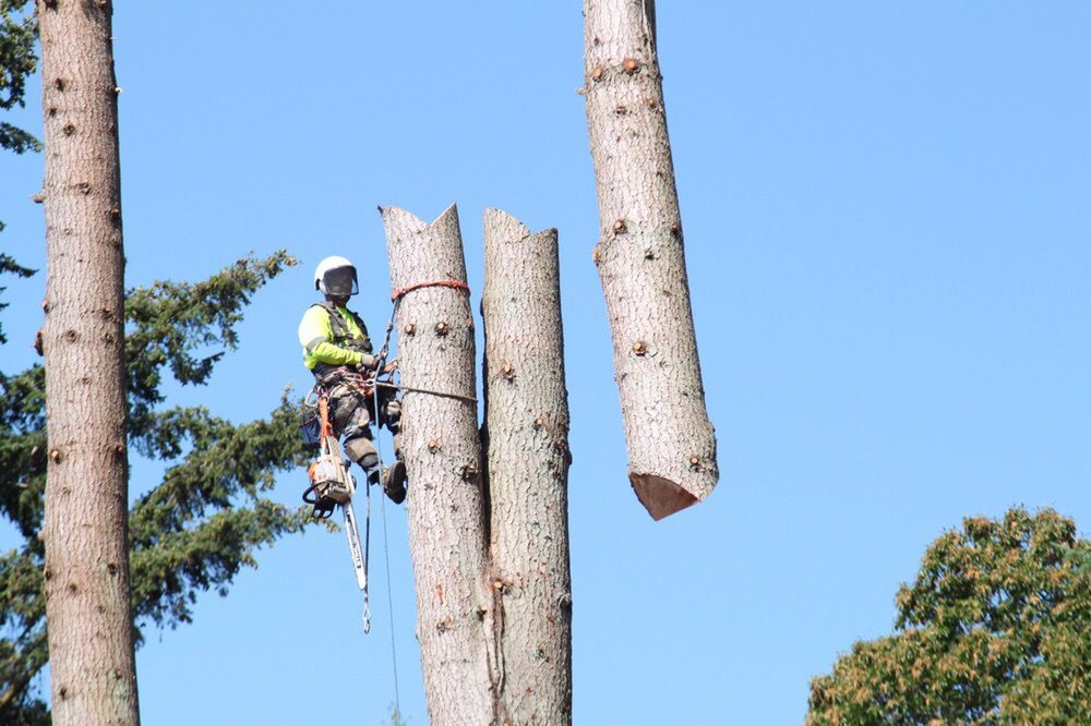 A's Tree Service: 31506 64th Ave NW, Stanwood, WA