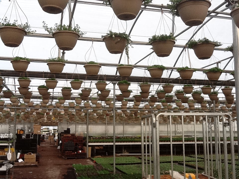 Connie's Country Greenhouse: 325  2400th Ave, Latham, IL