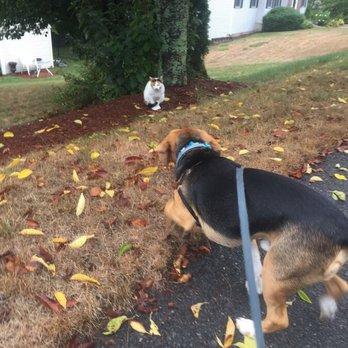Dog Grooming Marlborough Ma
