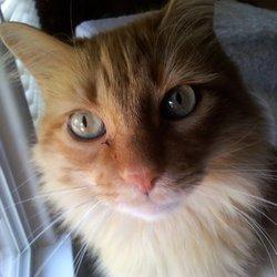Best Friends Pet & House Sitting Service - 26 Photos - Pet