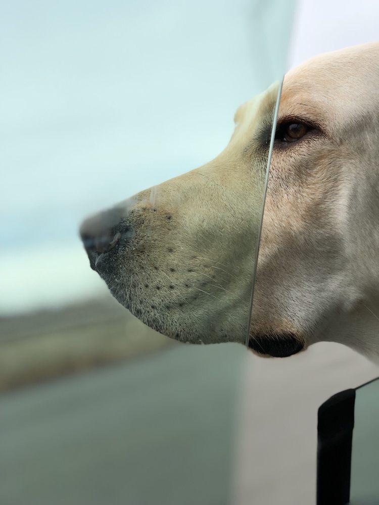 Dulles Executive Pet Center: 449331 Lane Ct, Sterling, VA