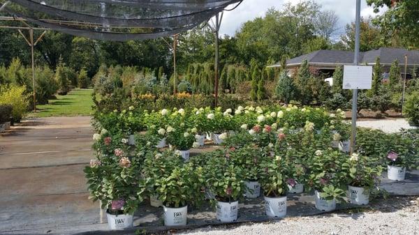 Dammannu0027s Lawn U0026 Garden Center 4914 Rockville Rd Indianapolis, IN Nurseries    MapQuest