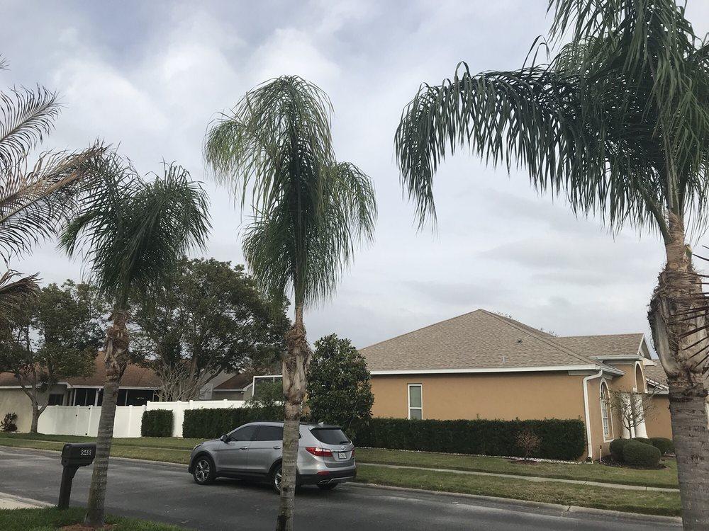 Morris Tree Service: Holiday, FL