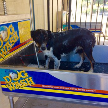 Tahoe blue car wash and dog wash 19 photos 12 reviews pet photo of tahoe blue car wash and dog wash reno nv united states solutioingenieria Image collections