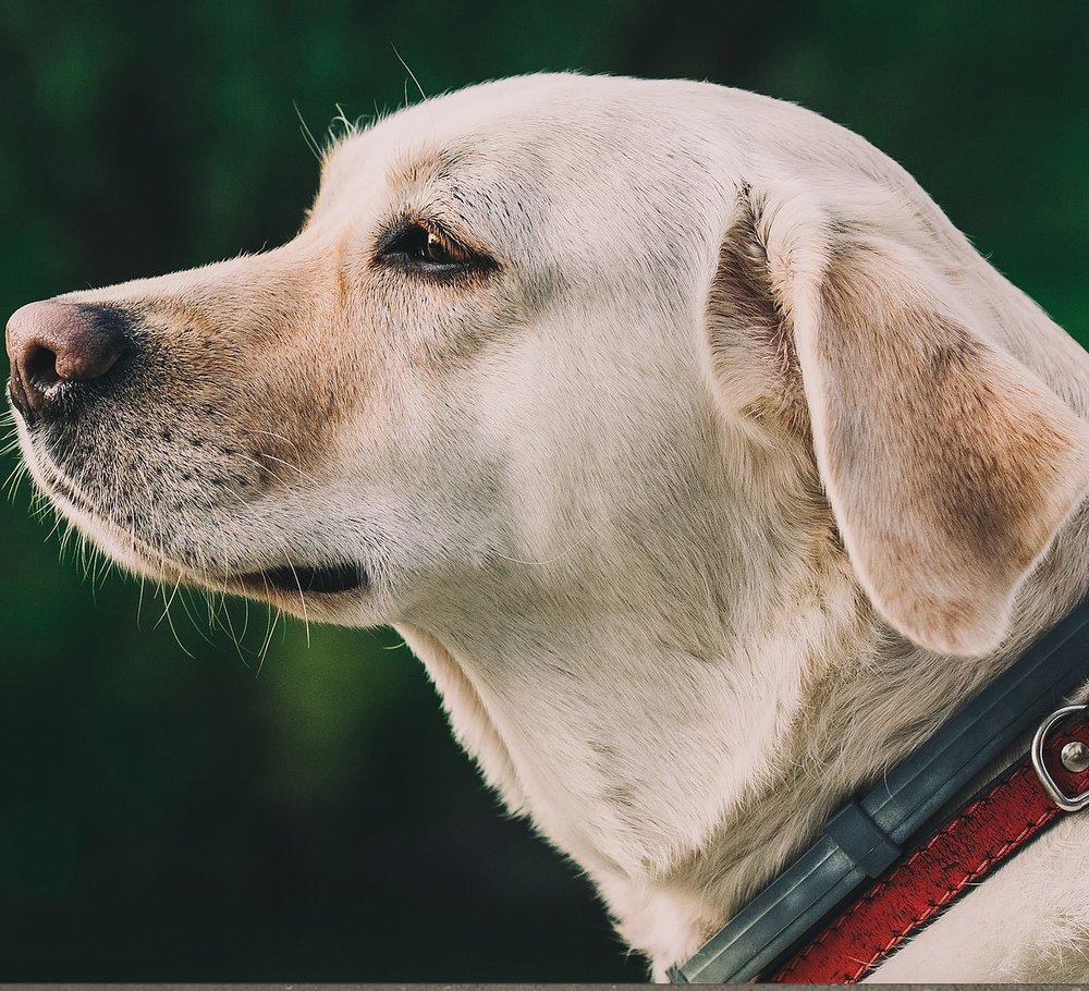 Wade Veterinary Services