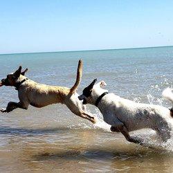 Montrose Dog Beach - 347 Photos & 248 Reviews - Dog Parks