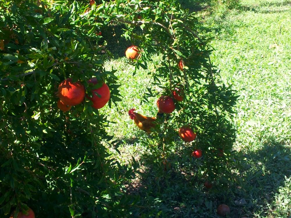 Oasis Valley Orchard: 1324 S Moapa Valley Blvd, Overton, NV