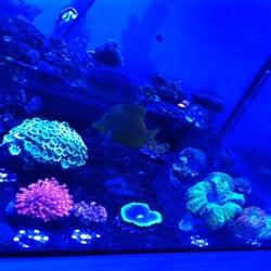House of Corals - Get Quote - 10 Photos - Aquarium Services - 7374 ...