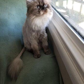 Fritzy's Pet Care Pros - (New) 120 Photos & 157 Reviews